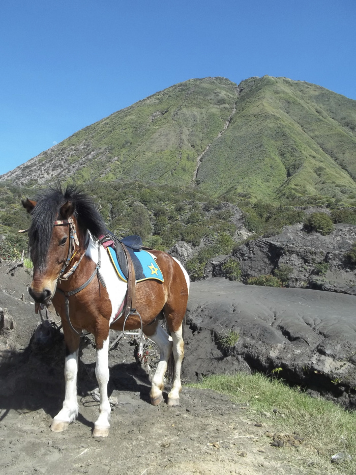 Horse at Bromo National Park landscape of Indonesia